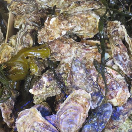 seafood shellfish group of, Canon POWERSHOT S120