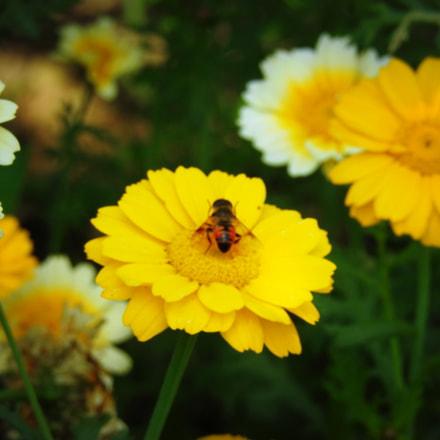 The Flower.., Nikon COOLPIX P900