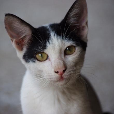 Cat looks, Fujifilm FinePix S5Pro
