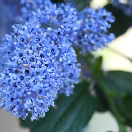 Blue, Canon EOS 1200D, Canon EF-S 18-55mm f/3.5-5.6 III