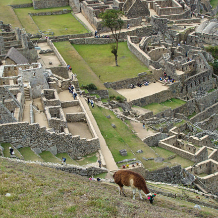 Machu Picchu, Peru, Sony DSC-H3
