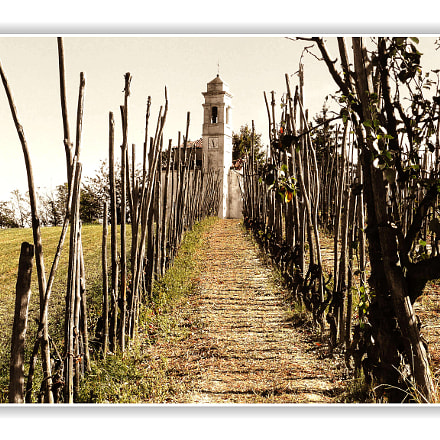 Old style vineyard, Panasonic DMC-TZ3