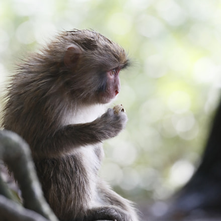 Child Monkey, Canon EOS-1D X MARK II, Canon EF 100-400mm f/4.5-5.6L IS II USM