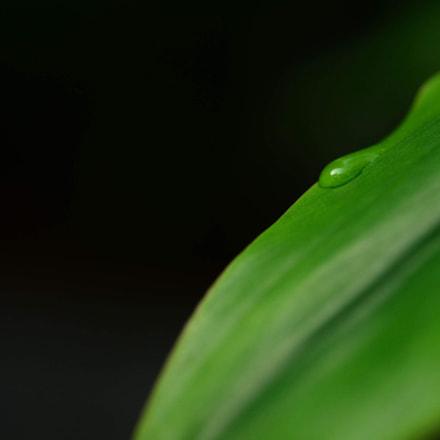 Droplet, Nikon D800, AF Micro-Nikkor 60mm f/2.8D