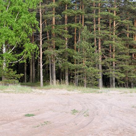 Pines and sand, Nikon D7000, AF-S DX Nikkor 35mm f/1.8G
