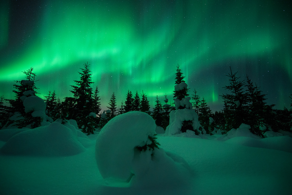 Photograph Forest Lights by Arild Heitmann on 500px