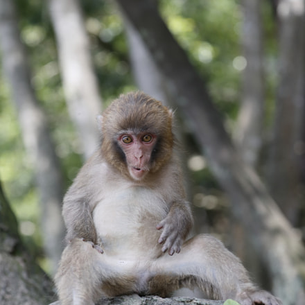 Relax Baby Monkey, Canon EOS-1D X MARK II, Canon EF 100-400mm f/4.5-5.6L IS II USM