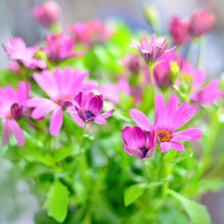 ..spring colors.., Nikon D5100, AF-S Nikkor 50mm f/1.4G