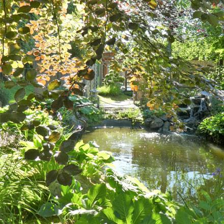 The garden pond, Panasonic DMC-TZ80