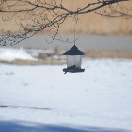A cold breeze, Nikon D300, Manual Lens No CPU