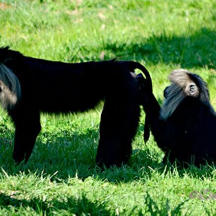 Zoo de Beauval 5, Nikon D5100, AF-S DX VR Zoom-Nikkor 55-200mm f/4-5.6G IF-ED