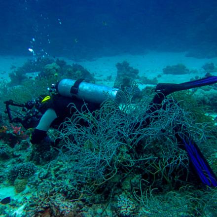 smallparts foto under water, Canon POWERSHOT SX260 HS
