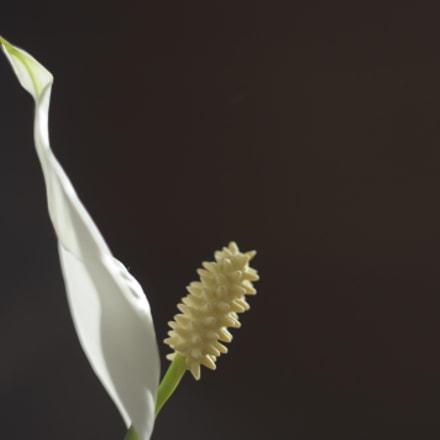 домашний цветок, Nikon D90, Manual Lens No CPU