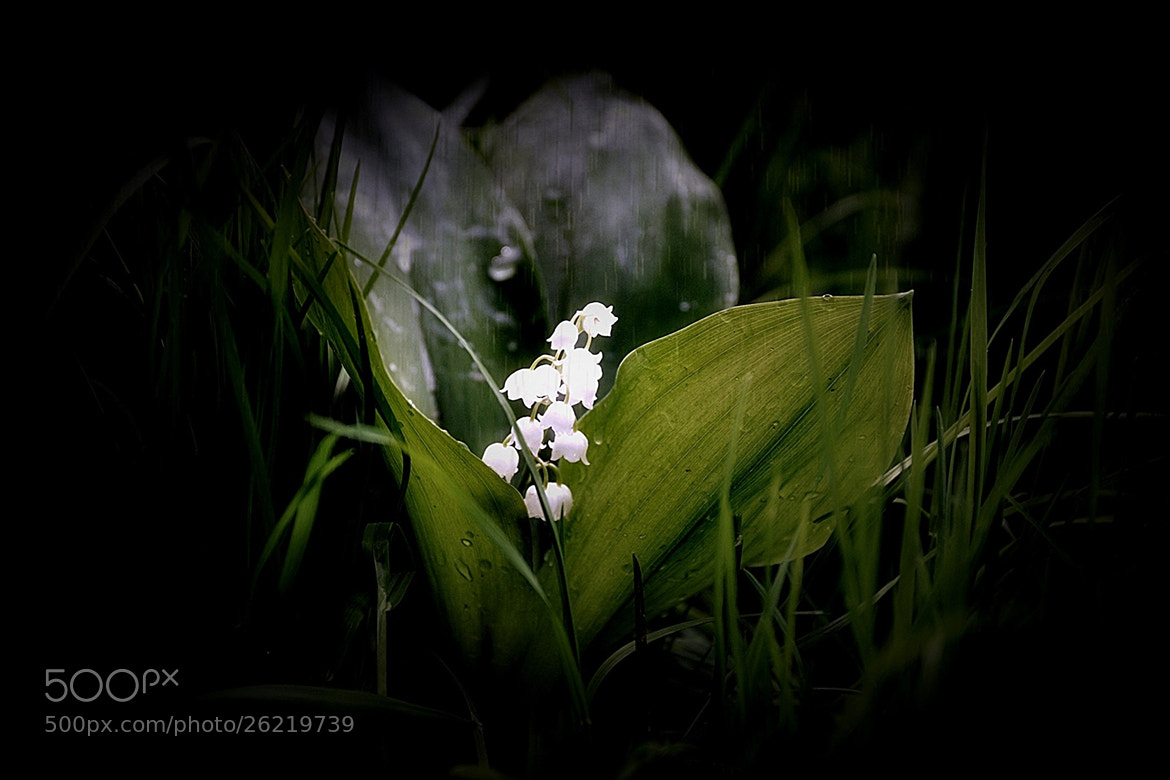 Photograph Lily of the valley by F plusO on 500px