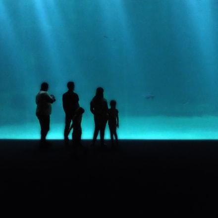 Des poissons et des, Fujifilm FinePix HS20EXR