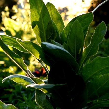 sunlight, Nikon D3300, AF-S VR Micro-Nikkor 105mm f/2.8G IF-ED