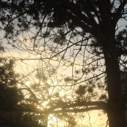 Tree, Canon EOS 1300D, Canon EF-S 18-55mm f/3.5-5.6 III