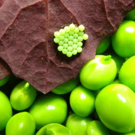 little green ..., Sony DSC-HX20V