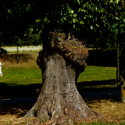 Mysterious tree, Nikon COOLPIX L820