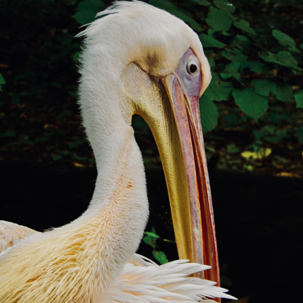 Bird, Nikon COOLPIX L820