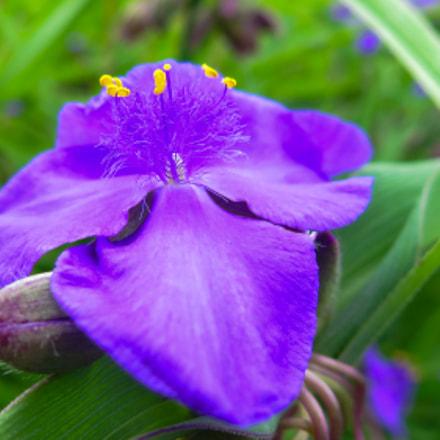 Purple flower, Canon POWERSHOT G16