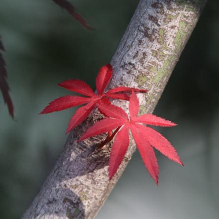 Ornament the autumn color, Canon EOS 80D, Tamron SP 150-600mm f/5-6.3 Di VC USD