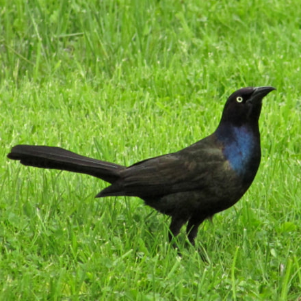 Release the Grackle!, Canon POWERSHOT SX400 IS