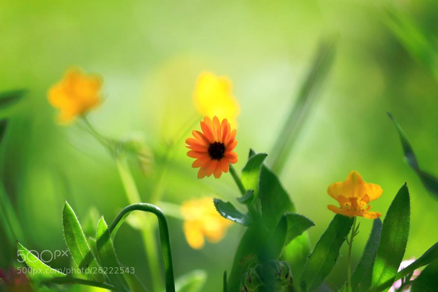 ? Welcome Spring ? by A-zaghamim photography (A-zaghamimphotos)) on 500px.com