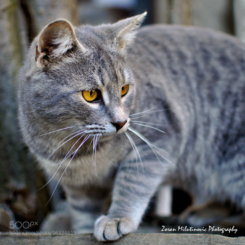 Photograph The Hunter by Zoran Milutinovic on 500px