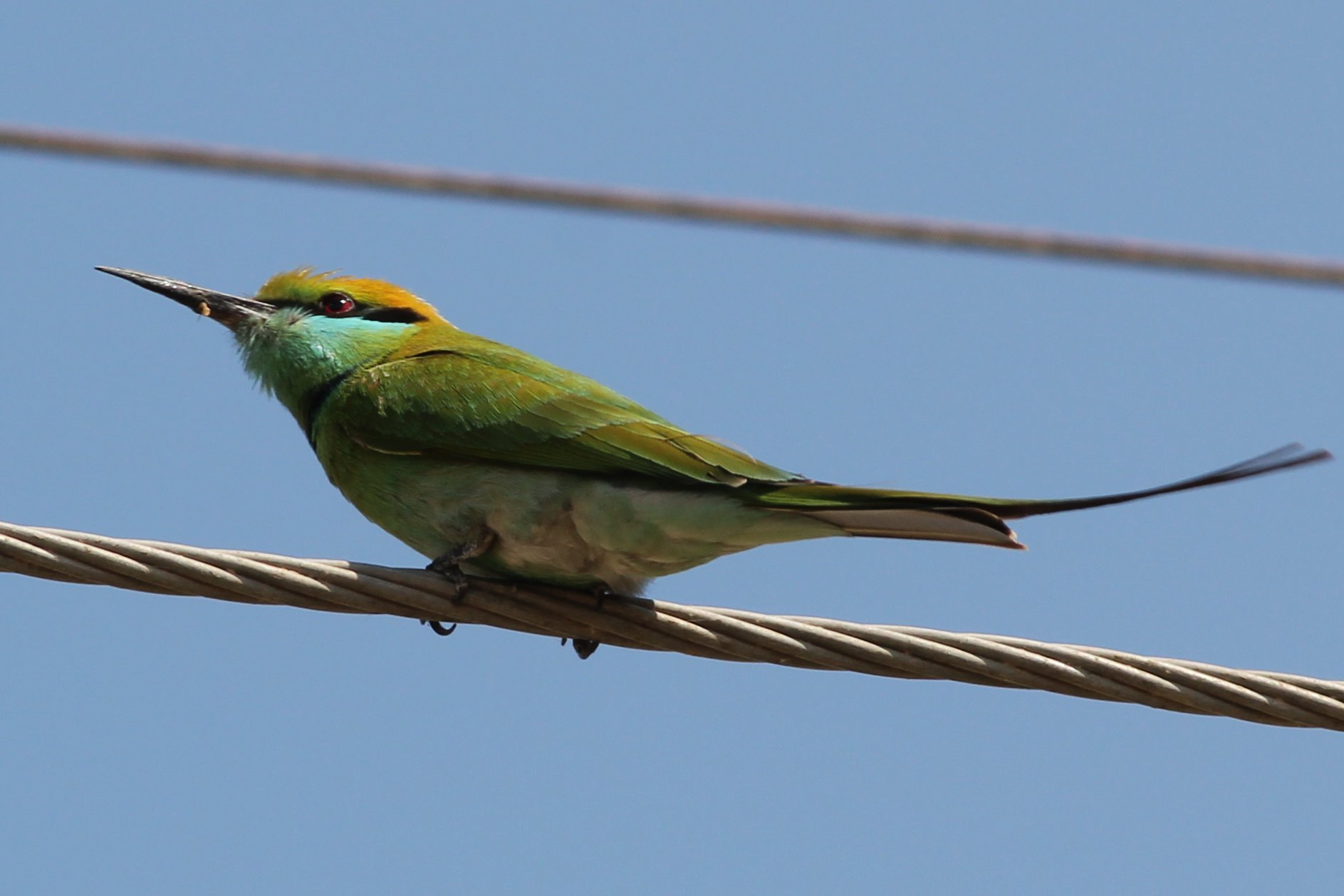 Photograph Green bee eater by Mihir Dhandha on 500px