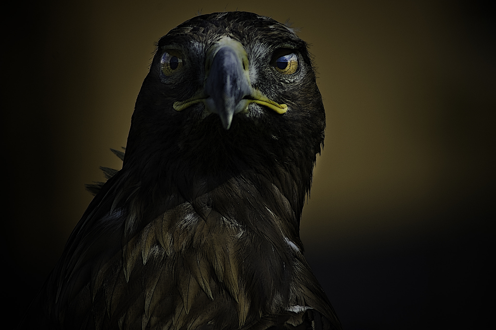 Photograph Portrait of a Golden eagle by Paco López on 500px