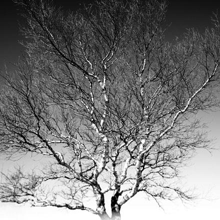 Birch tree f2.8, Canon EOS 100D, Sigma 17-70mm f/2.8-4 DC Macro OS HSM | C