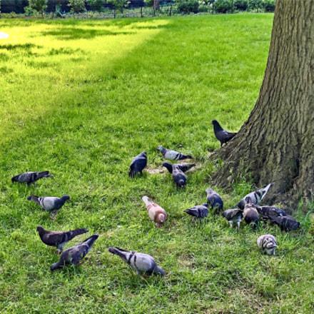 Central Park, Apple iPhone X