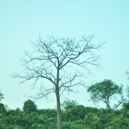 view of nature, Nikon D90, AF-S DX VR Zoom-Nikkor 18-105mm f/3.5-5.6G ED