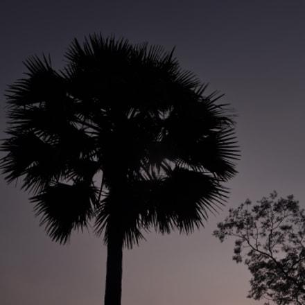 palm tree reflection, Nikon D90, AF-S DX VR Zoom-Nikkor 18-105mm f/3.5-5.6G ED