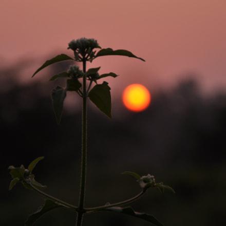 view of sunset, Nikon D90, AF-S DX VR Zoom-Nikkor 18-105mm f/3.5-5.6G ED