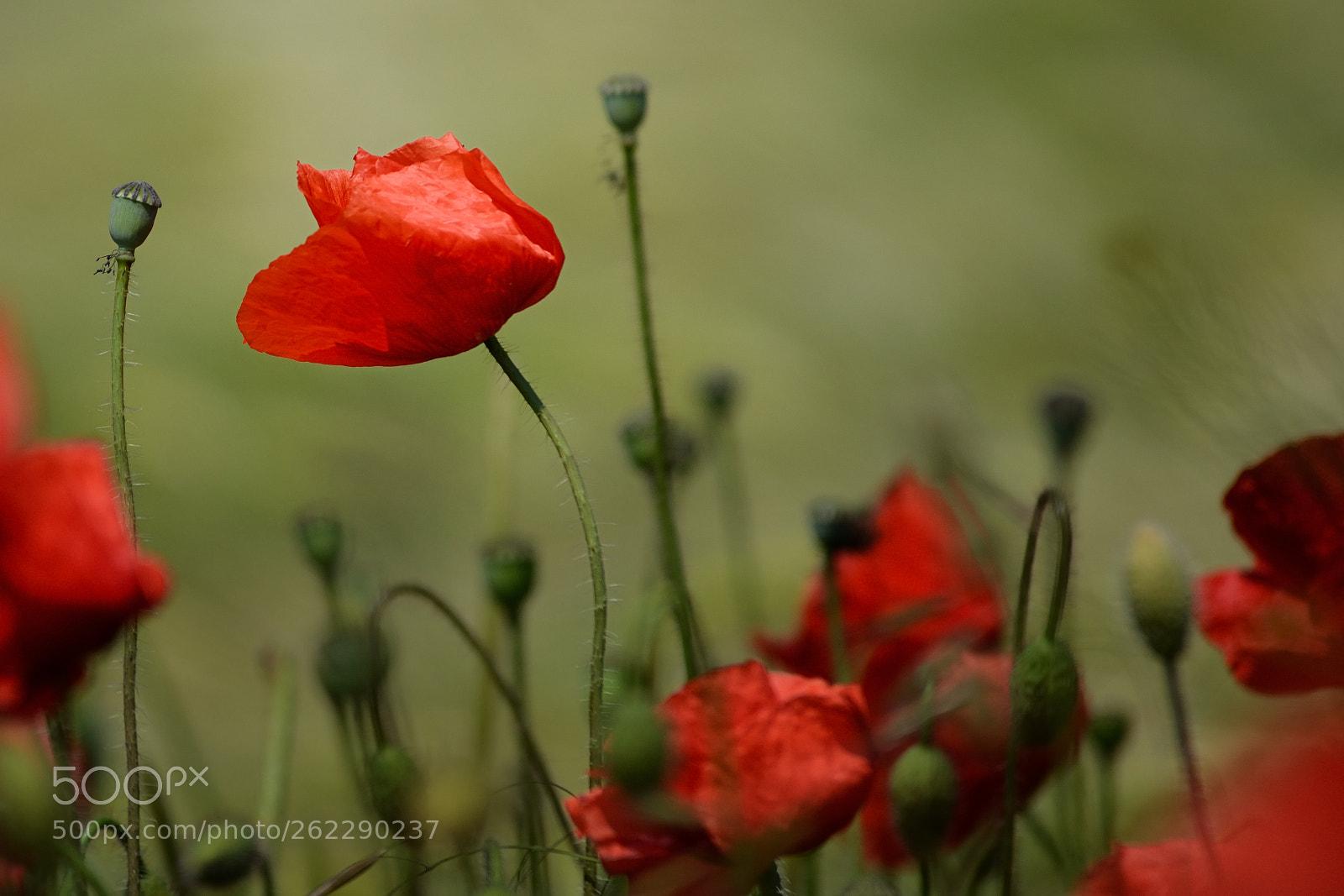wildflower, Nikon D7000, AF VR Zoom-Nikkor 80-400mm f/4.5-5.6D ED