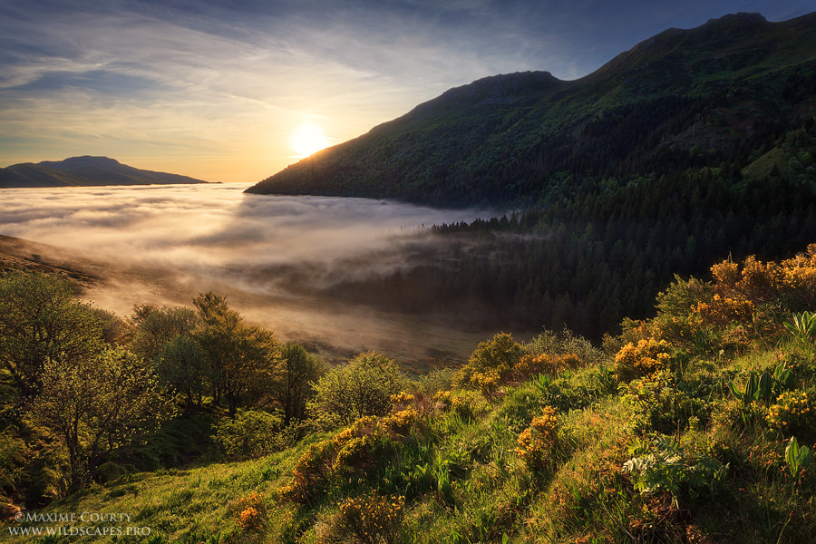 Photograph Mist in the Valley by Maxime Courty on 500px