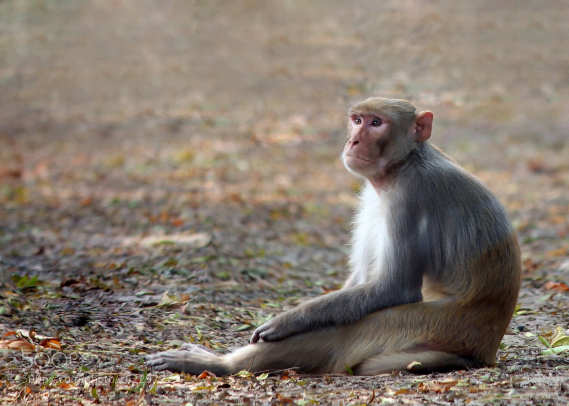 Photograph Tired  by Subhash Masih on 500px