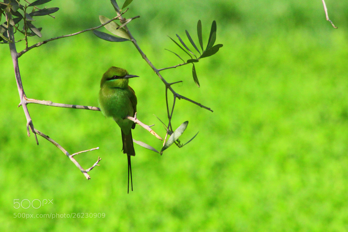 Photograph Green on Green by Ahmed Waheed on 500px