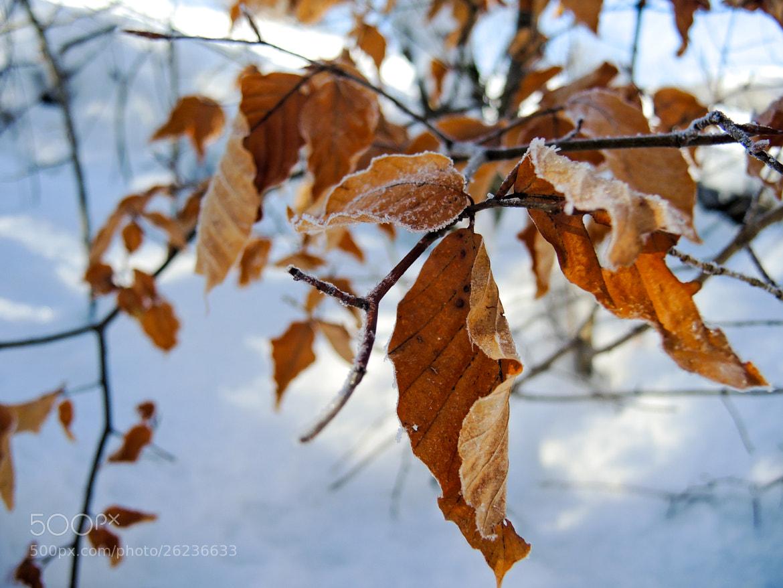 Photograph leaf tree by Aurélie Cornu on 500px