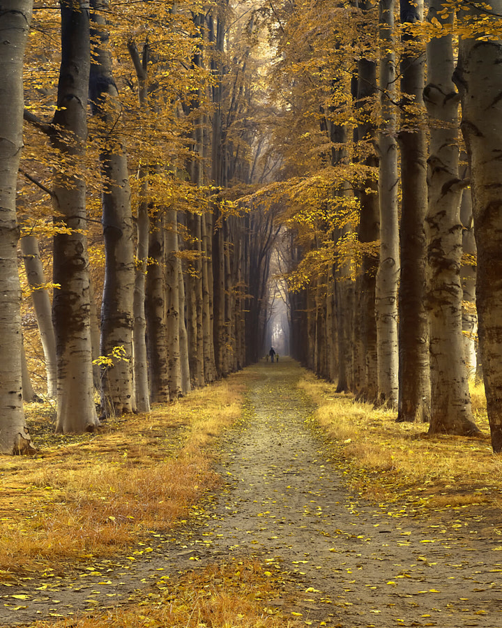 three two one, автор — Lars van de Goor на 500px.com