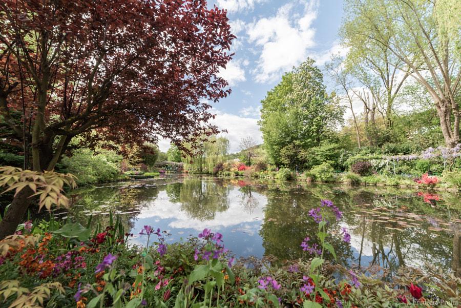 Le jardin de Monet, автор — Frédéric Protat на 500px.com