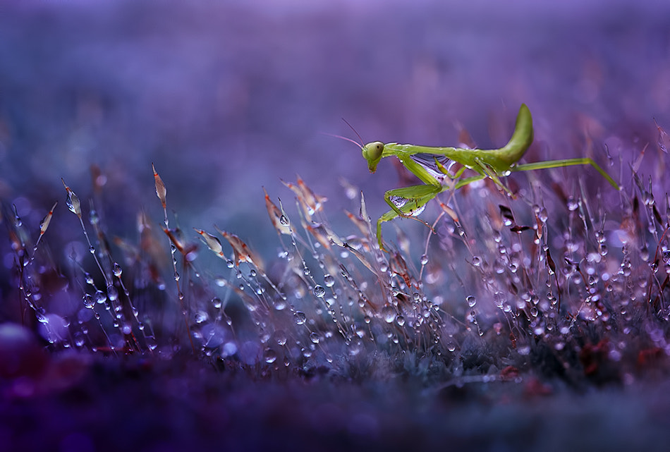 Photograph Morning my little world...<3 by Citra Hernadi on 500px
