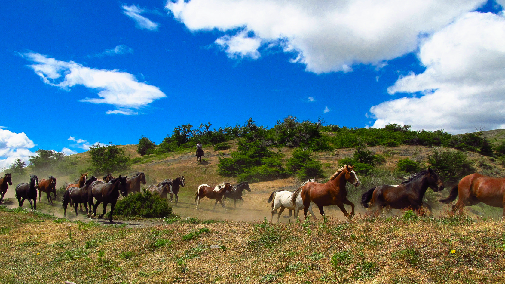 Photograph Wild Horses by eyals  on 500px