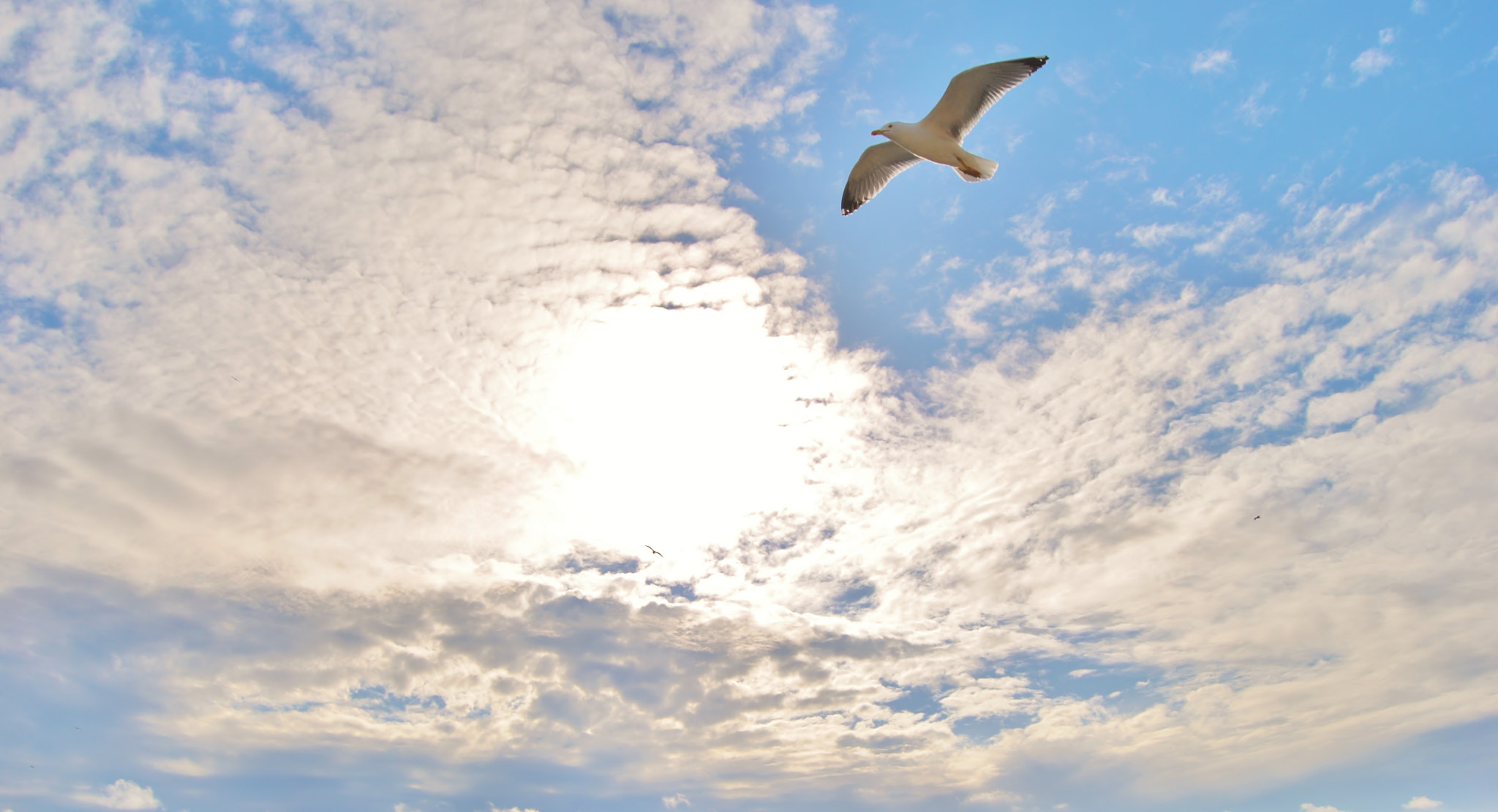 Photograph seagull by Vânia Ragageles on 500px
