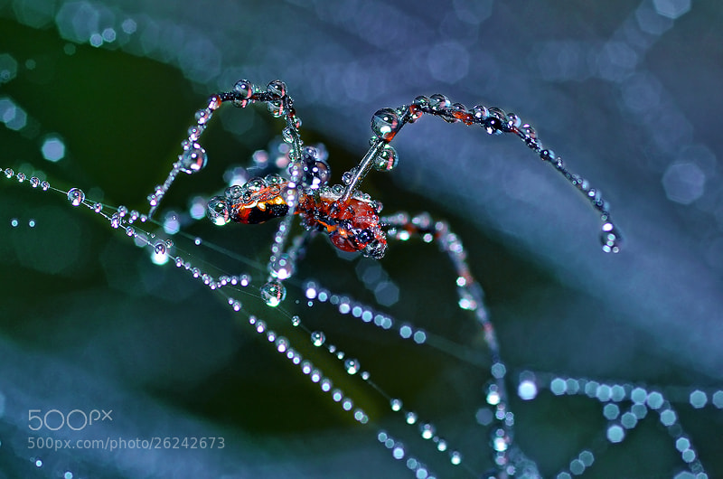 Photograph Spider... by Bu Balus on 500px