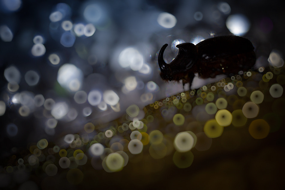 Photograph My Bubbles World by Alberto Di Donato on 500px