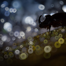 My Bubbles World by Alberto Di Donato (albydido)) on 500px.com