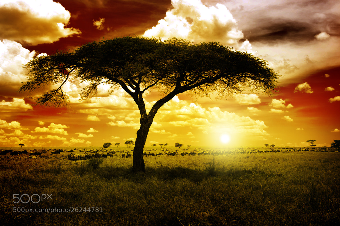 Photograph Africa Sunset by NDStudio Fotografi on 500px